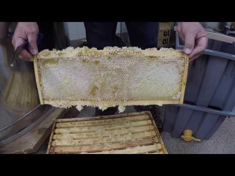 Extracting Honey, The Basics
