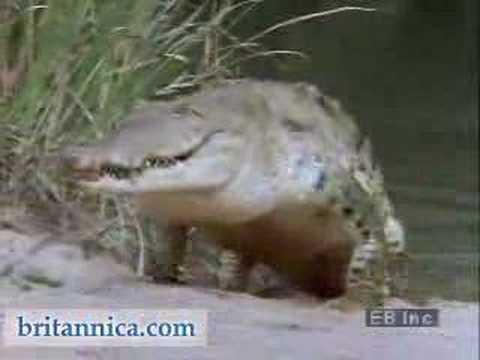 Wildlife of the Amazon Rainforest (Britannica.com)
