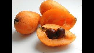 экзотические фрукты мушмула