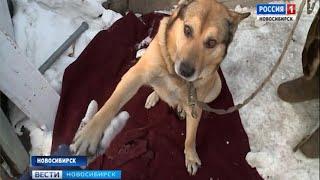 80-летняя жительница Новосибирска ищет нового хозяина для своей собаки