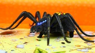 Spider Habitat Playset / Elektroniczny Dziki Pająk - Wild Pets / Dzikie Zwierzęta - Cobi - 29002
