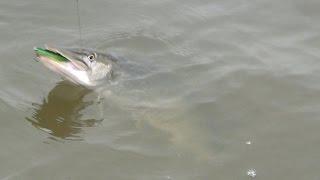 Аландские острова. Часть 2. Рыбачьте с нами.