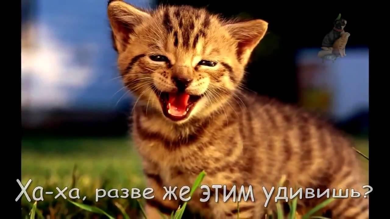 Кошки приколы Конкурс А вам слабо