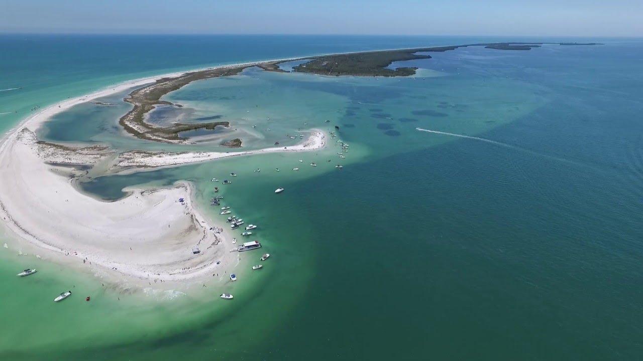 Sharks Honeymoon Island Florida