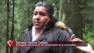 Santa Rosa Xochiac: un caso de éxito forestal. Clorofila
