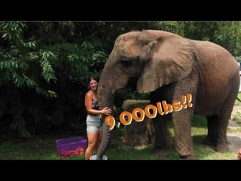 FEEDING MY 9,000LB ELEPHANT SISTER!