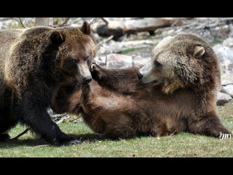 Travel Advise To Grizzly & Wolf Discovery Center By Travel Advisor