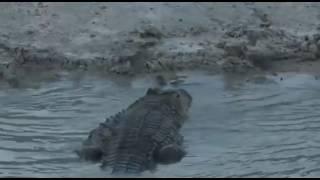 Krokodyl i Leopardy - świat zwierząt Afryki ,, Safari