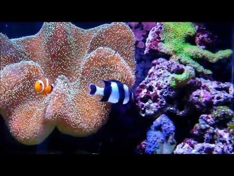 Рыбки Клоун и многие другие хищные рыбки