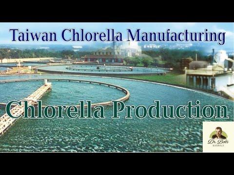 World's Best Chlorella Producer - Taiwan Chlorella