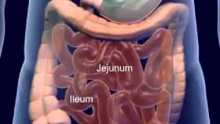 vuclip Le système digestif