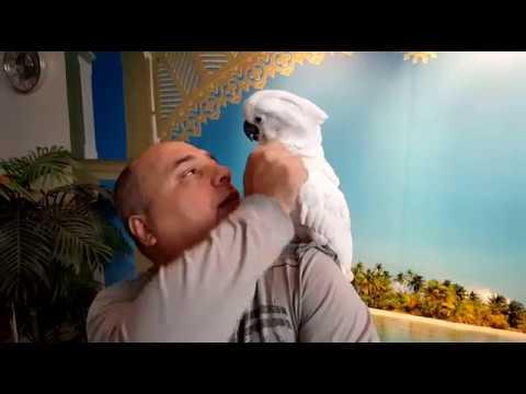 Comment Reconnaître Une Belle Mue De Votre Perroquet?