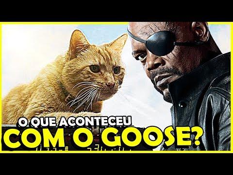 ONDE FOI PARAR O GOOSE DEPOIS DE CAPITÃ MARVEL?