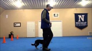 Jett (border Collie) Dog Training Video
