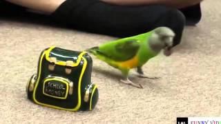 Funny animals Parrot funniest Смешные животные Попугаи