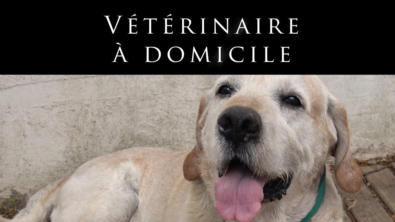 Le métier de vétérinaire à domicile - Dr. Bascon (30). Un film de Sylvie Poletto.