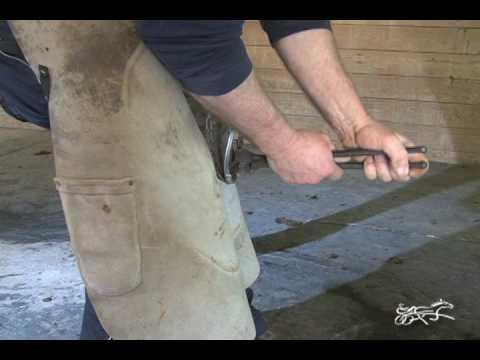 Tips Of The Trade - Shoe It Yourself --USTA Harness Racing Hoof Beats