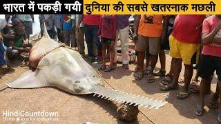 भारतीय मछुआरे के जाल में फंसी 700 किलो की खतरनाक मछली | 10 Most Unique and Dangerous Fish