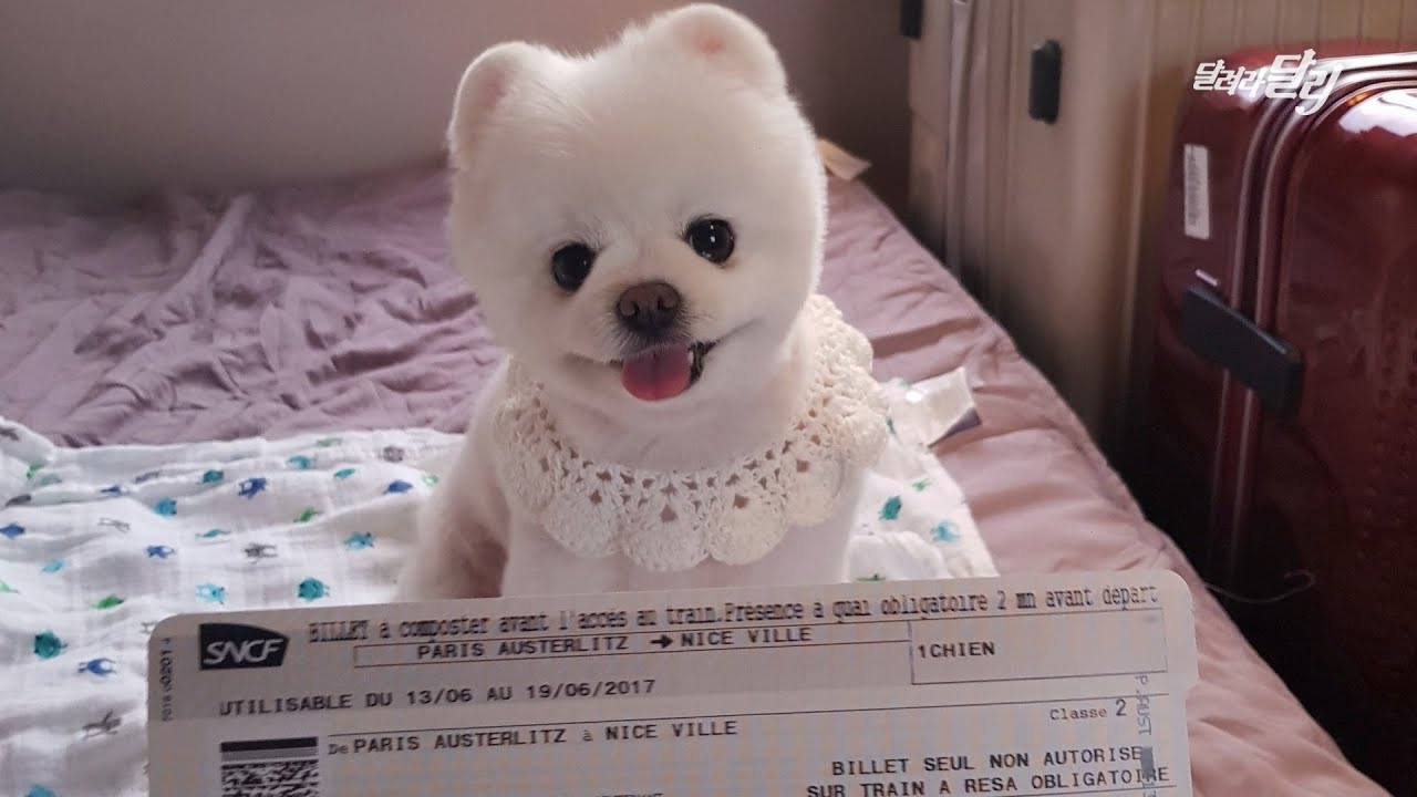 강아지도 기차표를 끊어야 한다니! 파리에서 니스로 가는 야간열차에 탄 달리