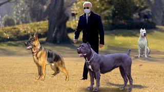 Какие собаки охраняют дом президента США Джо Байдена.