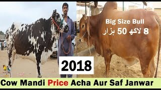 Sohrab Goth Cow Mandi Se Sasta Rate in Bhains Colony Cow Mandi - Cow Market in Pakistan