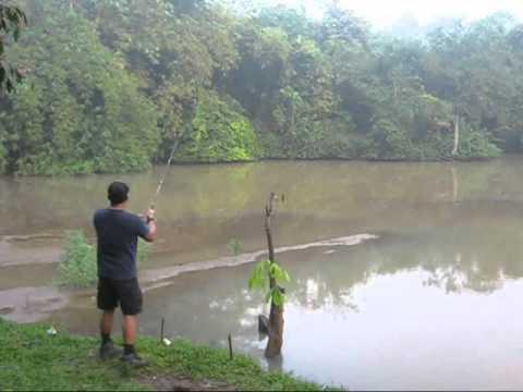 Mancing Ikan Gus / Casting Snakehead Fish