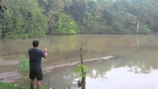 Mancing Ikan Gabus / Casting Snakehead Fish