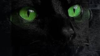 Детям.  Про доброго черного кота.