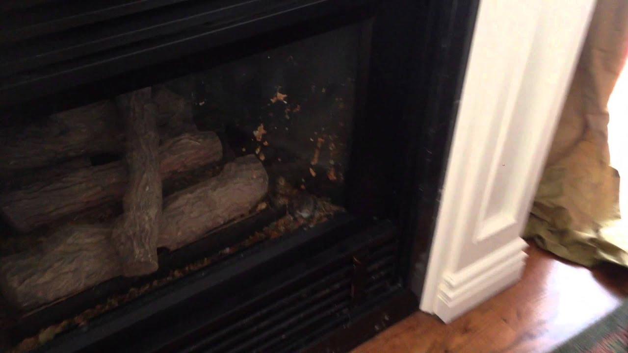 pest control toronto mice u0026 babies in gas fireplace youtube