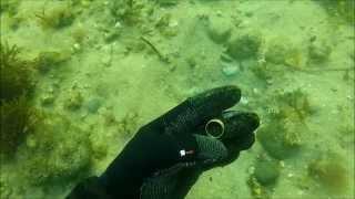 florida springs freediving