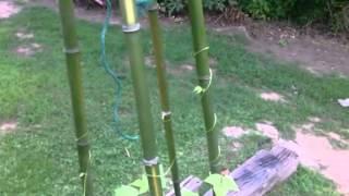 Homemade Trellis For Pole Beans