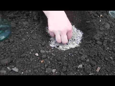 Правильная Посадка Семян Кабачков в Открытый Грунт! Выращивание и Уход! | открытый | открытом | кабачков | посадка | кабачок | кабачки | грунте | семян | грунт | по