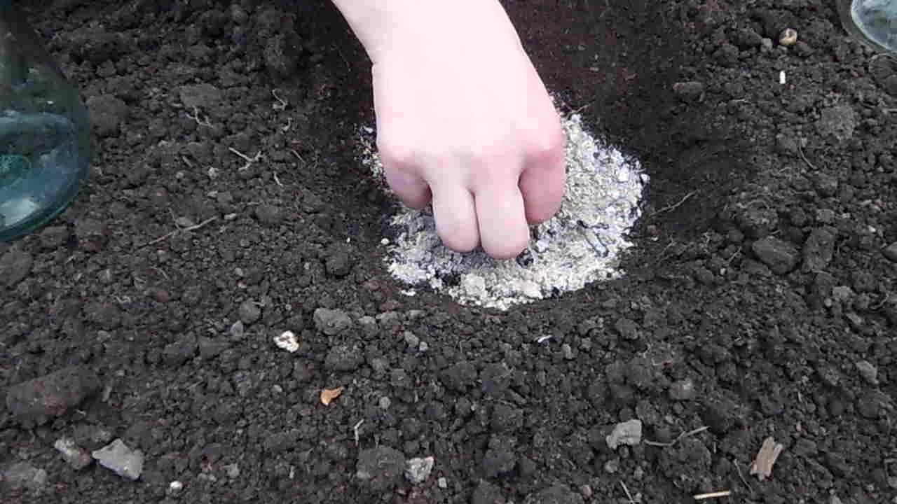 Когда сажать семена кабачков в открытом грунте 7