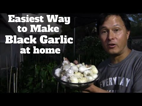 Easiest Way to Make Black Garlic at Home