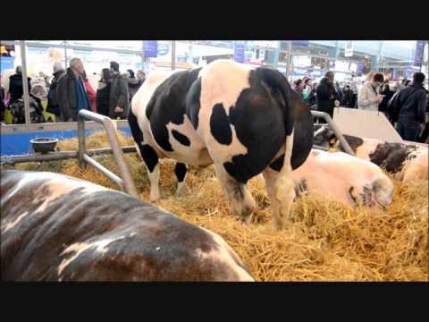 la foire agriculture de Paris 2015 les plus beaux taureaux