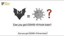 Can you get COVID-19 from bats?