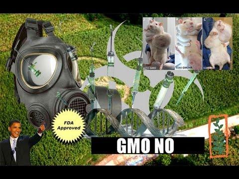 GMO NO!