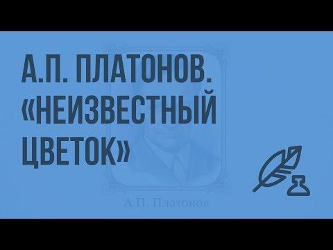 А.П. Платонов. Сказка-быль Неизвестный цветок