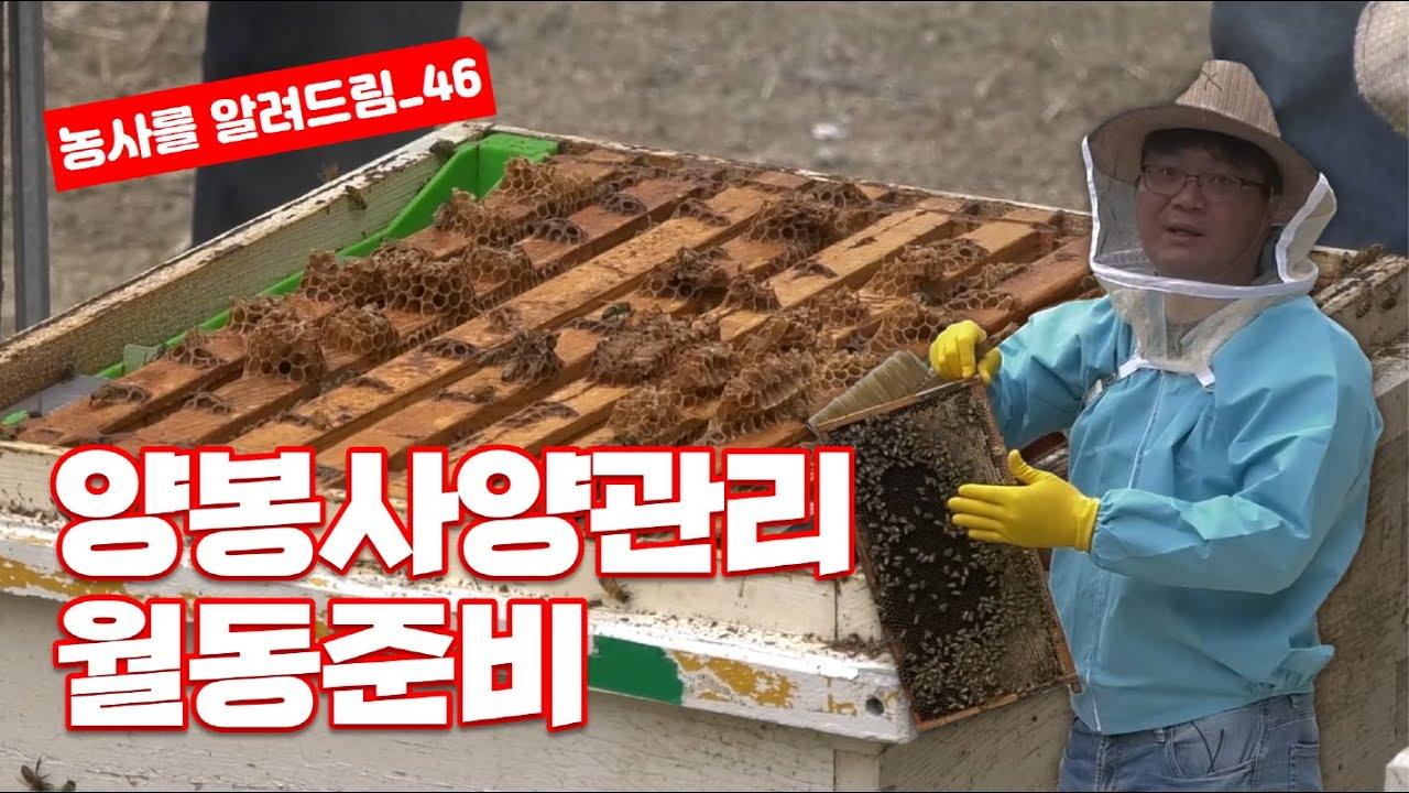 양봉 사양관리 월동준비