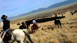 Antelope Island Bison Roundup from a rider