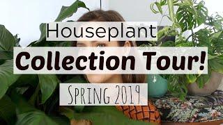 Houseplant Tour | Spring 2019 Houseplants!