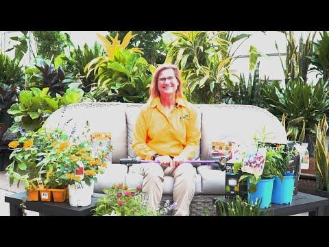 Virtual Seminar: Environmentally Friendly Gardening Tips ENGLISH GARDENS