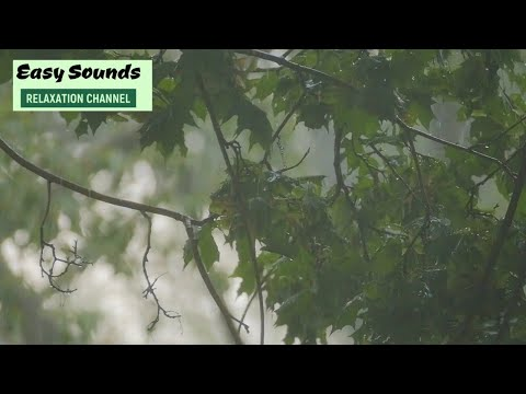 HEAVY RAIN And THUNDERSTORMS- 11 Hours of Real Rain Forest Sounds and Thunder (DEEP SLEEP)