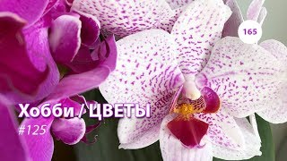 165#125 / Хобби-Цветы / ОБЗОР ЗАПАДНОГО ОКНА 02.2019