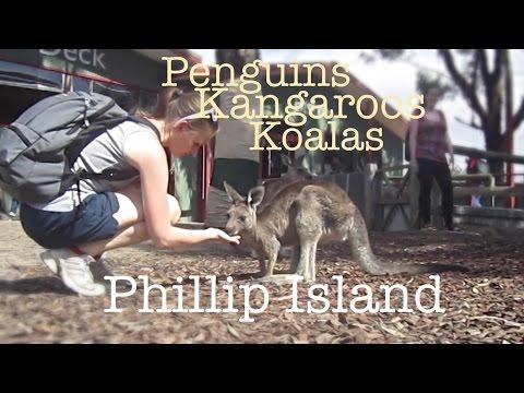 Phillip Island Penguin Parade, Kangaroos And Koalas
