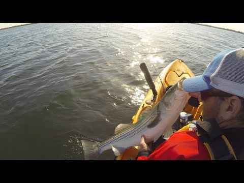 jamaica-bay---kayak---striped-bass-on-bunker!