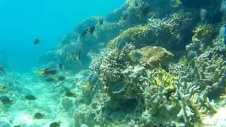 こちらは沖縄ヤンバルです。 ダイビングスポット ナカユクイでシュノー...