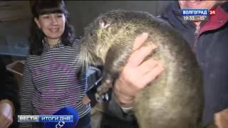 В Волгограде работает ферма по разведению нутрий