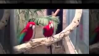 Танцующие попугаи!!Всем смотреть!(, 2015-01-08T22:05:06.000Z)