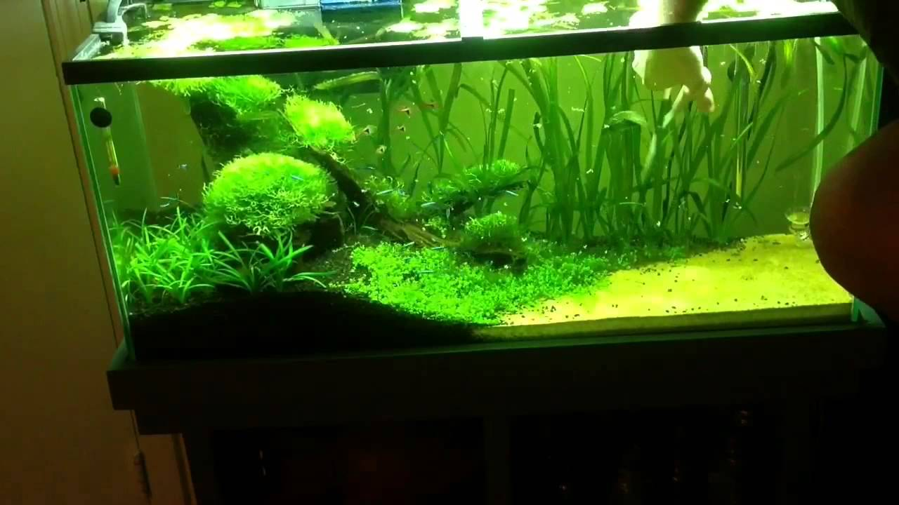 Planted Aquarium Progression Over 3 Months Youtube